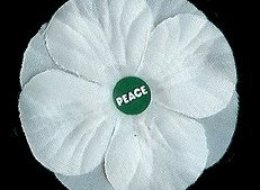WHITE-POPPY-large